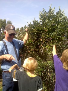 Picking blueberries at Shuqulak Farms