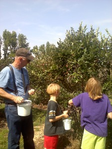 Blueberry Picking at Shuqulak Farms