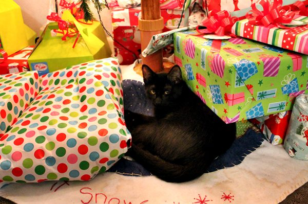 Christmas gifts and cat